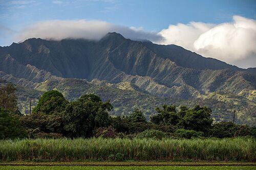 Oahu Sugar Tour